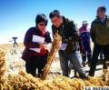 La verificación de los cultivos de quinua que hizo la comisión china /CIQ