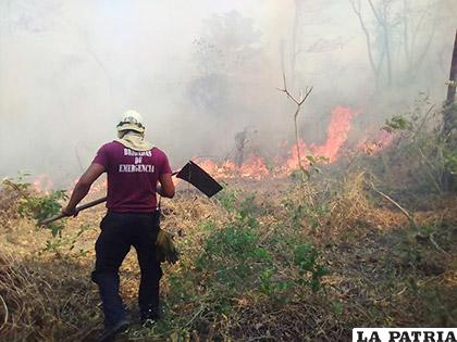 El incendio también causó pérdidas de fauna silvestre / EL NUEVO DIARIO