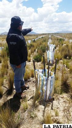 Positivos resultados tienen las parcelas demostrativas de plantaciones forestales/ GAD-ORU