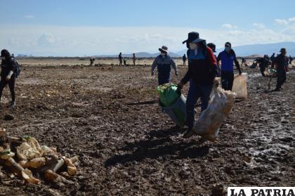 Cientos de bolsas con residuos fueron recogidas
