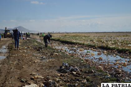 La limpieza busca cambiar el deplorable panorama de las orillas del lago