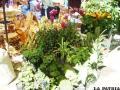 Hermosas plantas en la Feria Oruro Moderno
