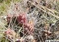 La infusión de la raíz machacada previene la retención de orina