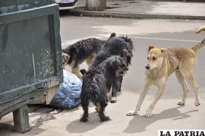 sobrepoblacion de animales