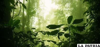 Los bosques proporcionan alimentos, bienes y servicios esenciales para la supervivencia de la humanidad
