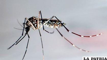 Solo de zika el país contabilizó 19.000 casos de infecciones