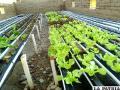 La nueva alternativa agrícola  frente al cambio climático