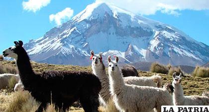 Parque Nacional Sajama, la única área protegida en el departamento de Oruro /BOLIVIA EN TUS MANOS