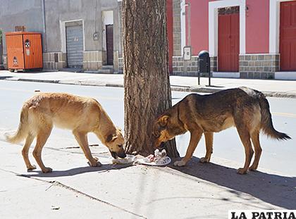 Muchos canes estos días se encuentran en las calles /LA PATRIA /CARLA HERRERA