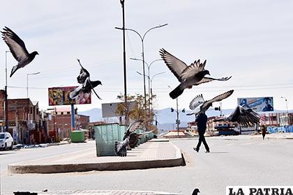 Las palomas suelen ser alimentadas por la gente /LA PATRIA