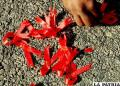 ONU dispuesta a erradicar el sida