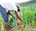 Técnicos municipales se capacitan en producción agraria y pecuaria en Proyecto Suma Uma