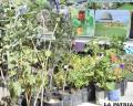 Cinco municipios se beneficiarán con forestación y áreas verdes