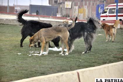 Los perros deben estar dentro las viviendas, caso contrario serán capturados