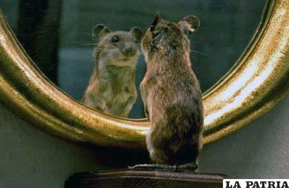 La capacidad de los animales de reconocerse en el espejo no es algo muy común