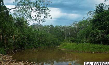 Parque Madidi, área protegida de Bolivia