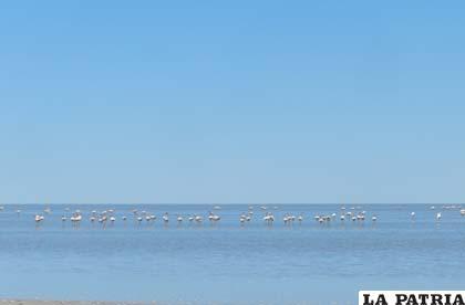 Se deben efectuar acciones para aumentar nivel de agua en el lago Poopó
