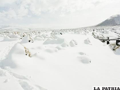 Animales sufren por bajas temperaturas que se registran en Oruro /BRIGADA PARLAMENTARIA
