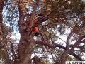 Gatito muere tras caer de un árbol