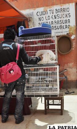 Cada vez son menos, los animales comercializados en los mercados de manera ilegal /LA PATRIA