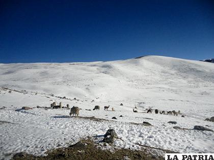 Son más de 60 hectáreas que fueron afectadas /Money