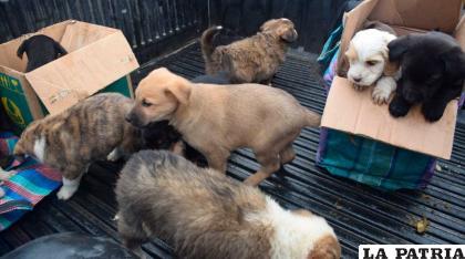 La esterilización es importante para evitar la sobrepoblación de mascotas /LA PATRIA