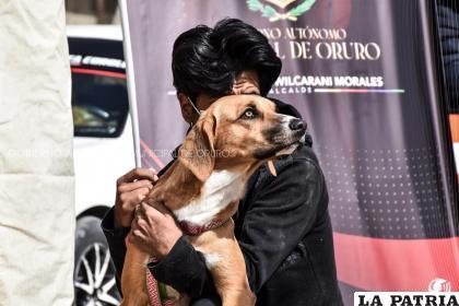 La adopción responsable permitirá cuidar bien a las mascotas / RR.SS.