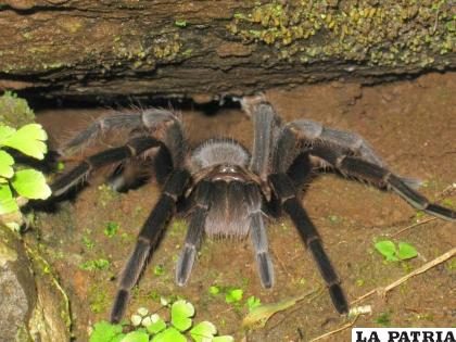 Las arañas son seres sin huesos / Tripadvisor