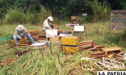 Los apicultores tienen pérdidas económicas a causa de los pesticidas /EL DÍA