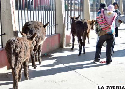 Sector de la Terminal sirve de baño hasta para los burros