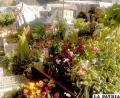 Las plantas requieren de mayores cuidados en invierno