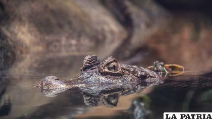 No existen recursos para mantener el ecosistema y poblaciones de estos animales