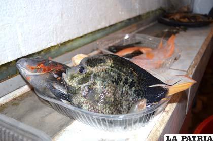 Uno de los peces que murieron por causas desconocidas el fin de semana