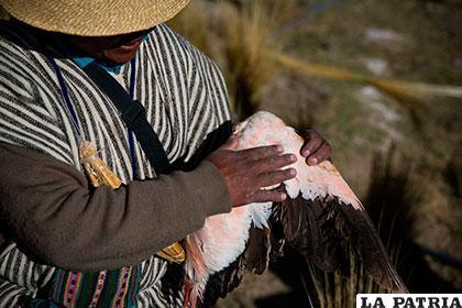 Emilio Huanaco con su última ala de flamenco, cuyas plumas se usan para bajar la fiebre /NYT