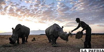 El estudio afirma que la población de más del 30% de las especies de animales vertebrados está disminuyendo