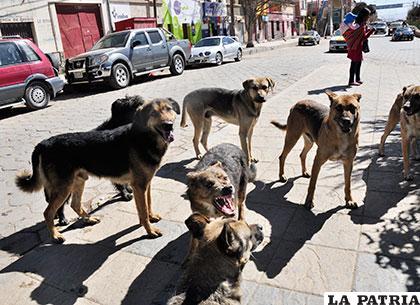 Son 62 casos positivos de rabia canina en la ciudad /Archivo