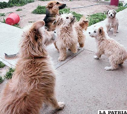 Se busca reducir el número de canes callejeros