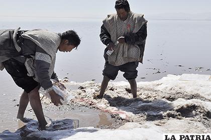 El clima está colaborando con la crianza de peces en el lago Poopó /ARCHIVO