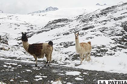 Los municipios de la región Nor Occidente y Occidente, fueron severamente afectados por la nevada /INTERNET