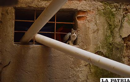Los felinos están escondidos dentro de las celdas de la Felcc /LA PATRIA