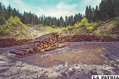 La tala es un problema en varios países /RR.SS.