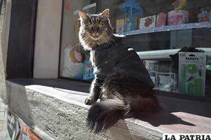 El felino ahora desconfía de las personas /LA PATRIA