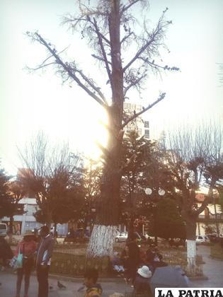 Uno de los árboles muertos en la plaza 10 de Febrero