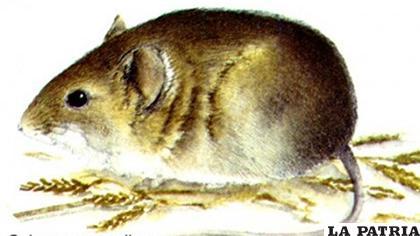 El arenavirus se denomina del Nuevo Mundo del genotipo Chapare /INTERNET