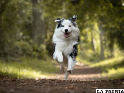 Cuando la mascota es tratada con cariño, la alegría se demuestra en su comportamiento /STOCK