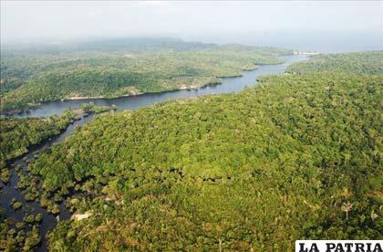 La Amazonía es considerada el pulmón del mundo y una de las regiones con la más alta concentración de biodiversidad y reservas genéticas del planeta