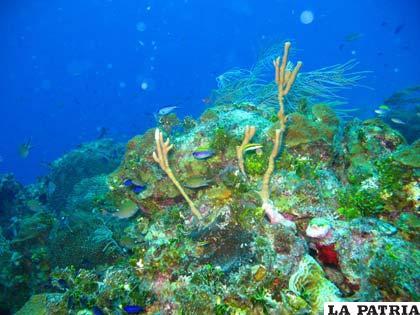 En Tayrona conviven ecosistemas como el de manglar, los corales, praderas de algas, bosques secos y húmedos...