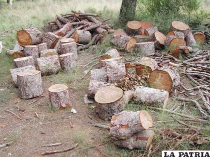 Reciclar papel ayuda a preservar los bosques