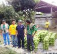 Empresarios bananeros de Bolivia con su producto de exportación /fondioc.gob.bo