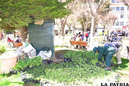Obreros del Municipio efectúan trabajo de ornamentación en la Plaza 10 de Febrero